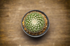 Close up of the cactus. On wooden table Royalty Free Stock Photos