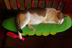Close up Calico cat sleeping happily on green pillow with one foot stepping on pink comb royalty free stock photo