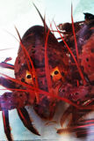 Close-up of California lobster Royalty Free Stock Photos