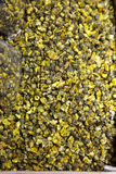 Close up camomile tea Stock Image