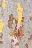 Close-up of the camouflage pattern Royalty Free Stock Photography