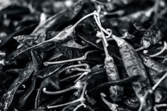 Close up of Capsicum annuum L,Dried red chilli.. royalty free stock photography