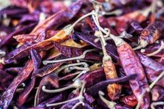 Close up of Capsicum annuum L,Dried red chilli.. Close up of Capsicum annuum L,Dried red chilli royalty free stock photo