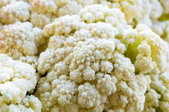 Close up capture on fresh cut cauliflowers on a table. In spring Stock Photography