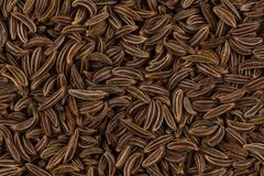 Close up caraway seeds Royalty Free Stock Images