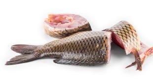Close up of carp fish. Stock Photos