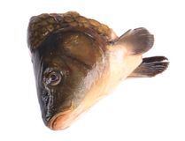 Close up of carp head. Royalty Free Stock Photography