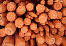 Close up of Carrot ends Stock Image