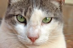 Close Up Cat Royalty Free Stock Photography