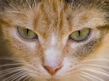 Close up of a cat Royalty Free Stock Images
