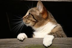 Close-up of Cat Royalty Free Stock Photo