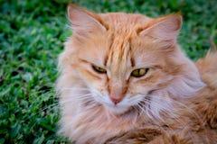 Close-up of Cat Stock Photos