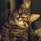 Close-up of Cat Royalty Free Stock Images