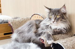 Close up cat Stock Image