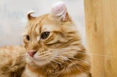 Close up cat Stock Photography