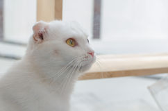 Close up cat Royalty Free Stock Images