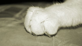 Close up of a cat claw with nail digging into material Stock Photography