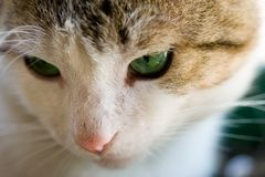 Close-up of a cat Stock Photography