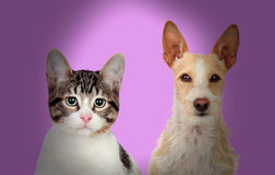 Close-up Of Cat And Dog royalty free stock image