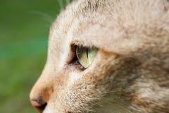 Close up cat eye closeup. Cat eye zoom her face Stock Photos