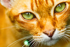 Close up cat eye. Look at the camara Stock Photography