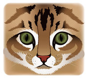 Close up of cat face Royalty Free Stock Images