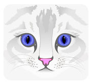 Close up of cat face Stock Photography