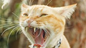 Close up cat face. At the nature background Royalty Free Stock Photo