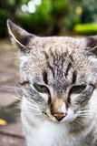 Close up cat face feeling bored Stock Image