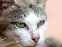 Close up cat face Stock Images