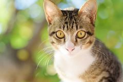 Close up of cat face. Portrait of cat face, cute animal and pet, Thai cat Royalty Free Stock Photos