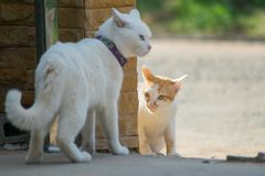 Close up cat fight Royalty Free Stock Images