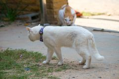 Close up cat fight Royalty Free Stock Photo