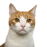 Close-up of a cat Stock Photo