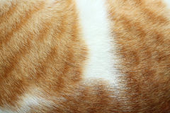 Close-up of cat fur brown fur and white Stock Images