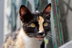 Close-up of a cat head with black fur. Monte, Portuguese island of Madeira stock photography