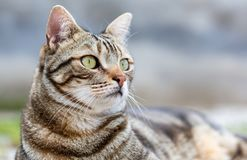 Close up of a cat stock images