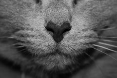Close up of cat nose and whiskers Stock Photos