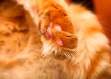 Cat paw. Close up of cat paw stock photos