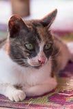 Close-up Cat Stock Photo