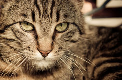 Close up of cat Stock Photography