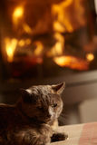 Close Up Of Cat Relaxing By Cosy Log Fire. Sitting on cushion Royalty Free Stock Photo