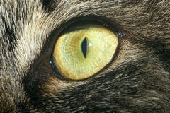 Close-up of cat's eye. Extreme close-up of green cat's eye royalty free stock images