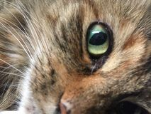 Close up of a Cat`s Eye stock images