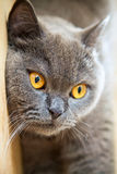 Close-up cat's face Stock Photo