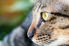 Close up on a cat`s face Royalty Free Stock Photography