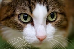 Close up on a cat's face Stock Photos