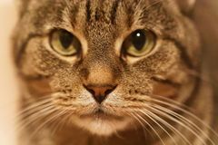 A close up of a cat`s face. A close up view of a cat`s face with shallow depth of field Stock Images