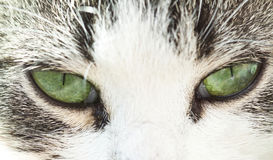 Close up on a cat Stock Photo