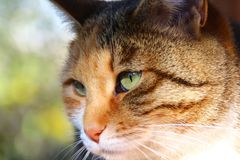 Close-up of a cat's head Royalty Free Stock Photography